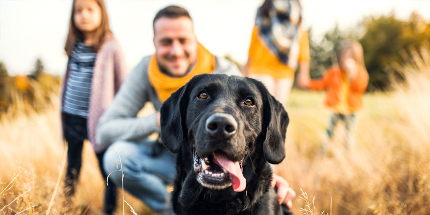 dog with family in background
